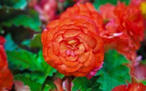 Picture macro, nature, petals, garden