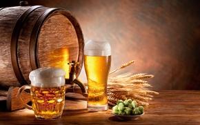 Picture foam, glass, beer, mug, ears, barrel, malt, light, hops