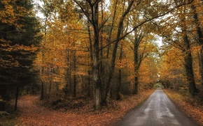 Picture road, autumn, forest, leaves, trees, the way