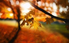Wallpaper blur, bokeh, autumn, leaves