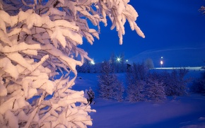 Picture winter, snow, trees, night, Park