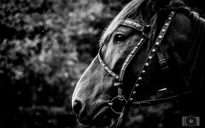 Picture mood, horse