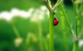 Picture green, plant, beetle, stem