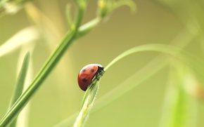 Picture ladybug, plants, grass