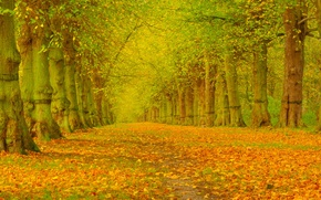 Wallpaper alley, trees, Park, autumn, leaves