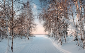 Picture winter, the sun, landscape, the evening, frost