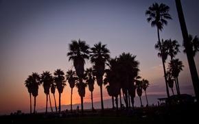 Picture summer, california, sunset, usa, los angeles, palm, vennice beach