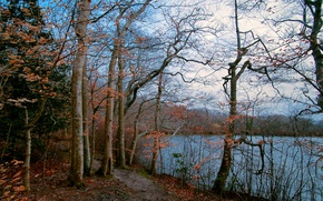Picture autumn, forest, the sky, trees, lake, path