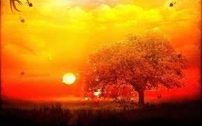 Wallpaper Tree, treatment, the sun