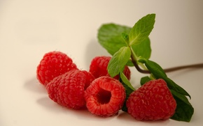 Picture leaves, raspberry, berry