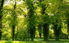 Picture greens, Park, green, Trees, trees, park