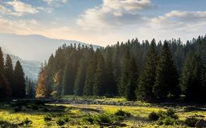 Picture forest, landscape, beauty