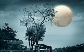 Picture birds, the city, art, full moon