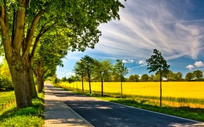 Picture road, field, the sky, trees, nature