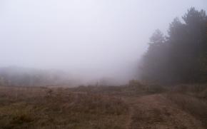 Picture autumn, forest, nebula, fog, rain, dense