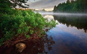 Picture forest, fog, river, Bush, morning