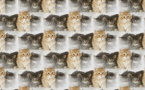Picture background, texture, kitty, pussy, family