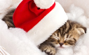 Picture winter, cat, kitty, hat, sleeping, red, striped, holidays, Christmas