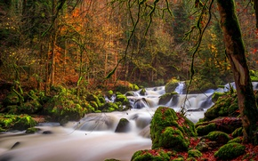 Picture autumn, forest, trees, branches, river, stones, moss