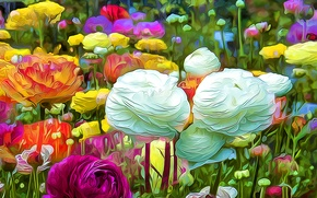 Picture flowers, nature, garden, meadow