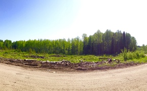 Picture road, forest, trees, spring