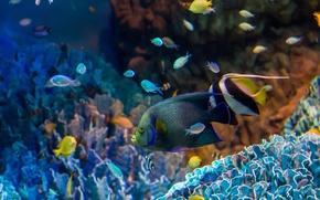 Picture fish, aquarium, corals