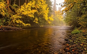 Picture autumn, forest, the sky, trees, river, stones