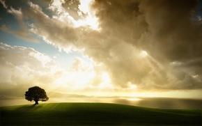 Wallpaper tree, light, clouds