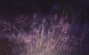 Picture purple, grass, macro, nature, photo, Wallpaper, color, plants