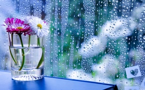 Picture glass, drops, flowers, glass