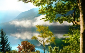 Picture forest, trees, mountains, fog, lake, reflection, morning