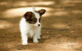 Picture dog, small, puppy, sun glare, on the street, lonely, Wallpaper from lolita777, stupid