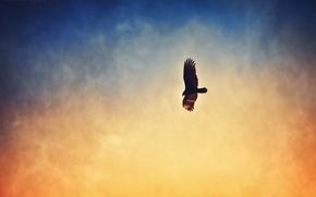 Picture the sky, bird, haze