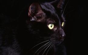 Picture black, Koshak