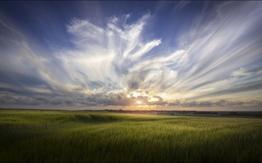 Picture field, summer, the sky, clouds