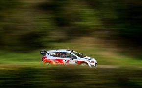 Picture Grass, Forest, Profile, Hyundai, Rally, i20, Neuville