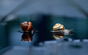 Picture water, macro, reflection, snail, acorn