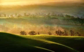 Picture light, field, morning, couples, Italy, Asciano, Tuscany