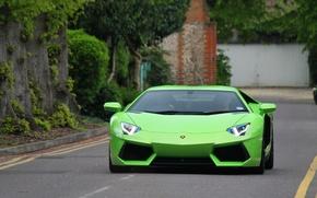 Picture road, trees, markup, green, lamborghini, front view, aventador, Lamborghini, aventador, the curb, lp-700-4