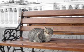 Picture sea, cat, cat, bench