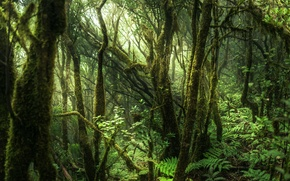 Picture Spain, Tenerife, Anaga Forest, Anaga