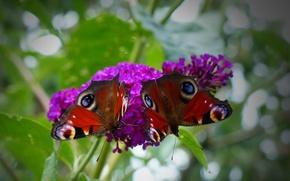 Picture flower, pattern, butterfly, plant, wings