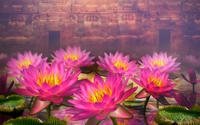 Picture leaves, flowers, dal, water lilies, wall