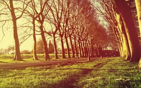 Picture grass, light, trees, freshness, nature, tree, village, Villa, the evening, village, the village, alley, village, …