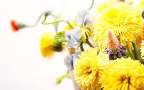 Picture white, background, Flowers, bouquet, blur