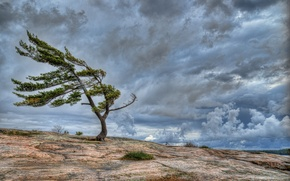 Picture the sky, clouds, rock, tree, the wind