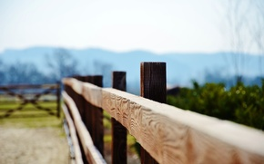 Picture leaves, macro, trees, green, background, tree, green, widescreen, Wallpaper, foliage, Board, the fence, blur, gate, …