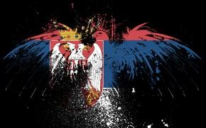 Picture eagle, flag, brothers, Serbia, Serbia, serbian flag, serbia, the Serbian flag