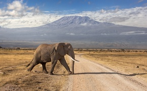Picture road, mountains, elephant, the volcano, Kenya, extinct