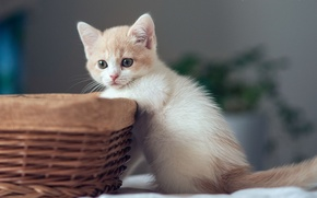 Picture baby, kitty, basket, Hannah, © Benjamin Torode